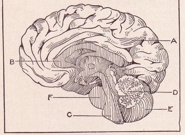 Bessere Forschungsergebnisse mit Behavioral Data