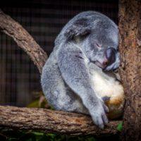 Behavioral Design für ein gesünderes Schlafverhalten