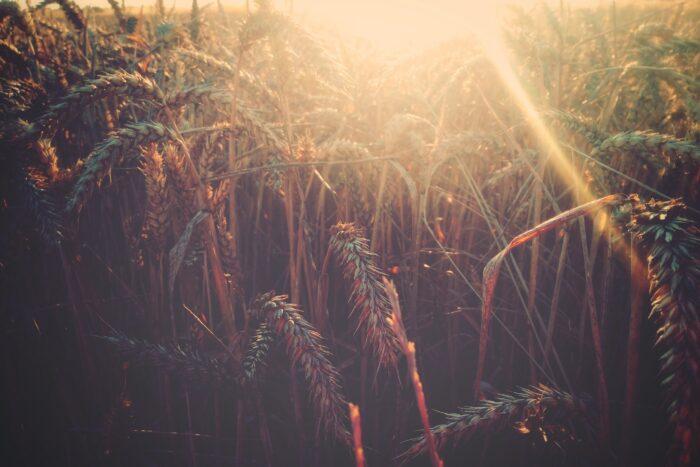 Heute versichern, später bezahlen: Wie man Bauern in Schwellenländern zu mehr Sicherheit verhelfen kann